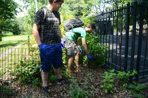 Biology students Matthew Wolman, left, and Matt Combs set a trap in Riverside Park on Manhattan's Upper West Side. Photo by Samantha Smith.