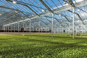 BrightFarms has been growing 125 tons of produce a year at its Pennsylvania greenhouse, using the latest in hydroculture technology. (Photo by Bud Glick)