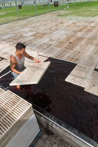 A farmer places seedling-filled boards in the greenhouse's 15-inch-deep hydroponic pool. (Photo by Bud Glick)