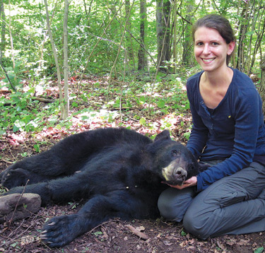 Christine Zolnik with a sedated black bear in New Jersey. Contributed Photo