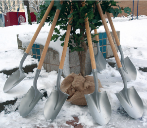 The exhibition's trees will be planted on Earth Day, April 22, at a venue still to be determined. Photo by Bruce Gilbert