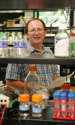 Edward Dubrovsky, Ph.D., is seeking to understand the complex processes that regulate the growth and development of fruit flies. Photo by Michael Dames