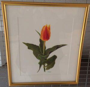 """Tulipa"" by Marie Murray"