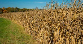 Economist's Study Aims to Improve Federal Farm Subsidies