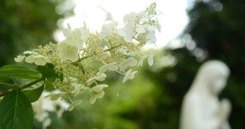Virgin-and-Flower