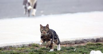 A feral cat runs across the Rose Hill campus