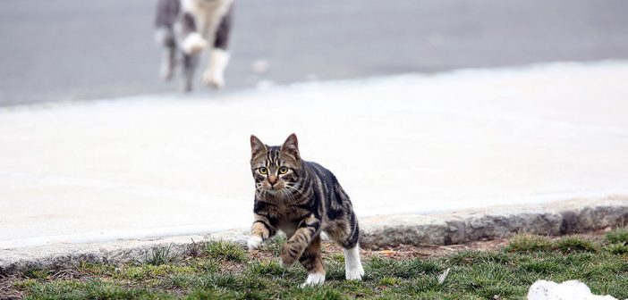 At Rose Hill, Feral Cats Find a Welcome Home