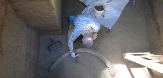 A researcher excavating the 14,000-year-old tusk. Credit: Lorraine Alfsen