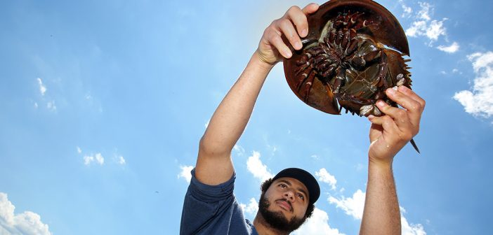Fordham student Adam Aly holds a horsehoe crab up in the air.