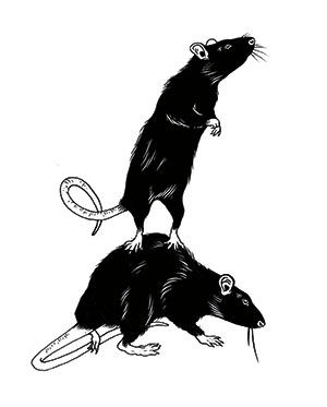 Illustration of rats by Louise Zergaeng Pomeroy