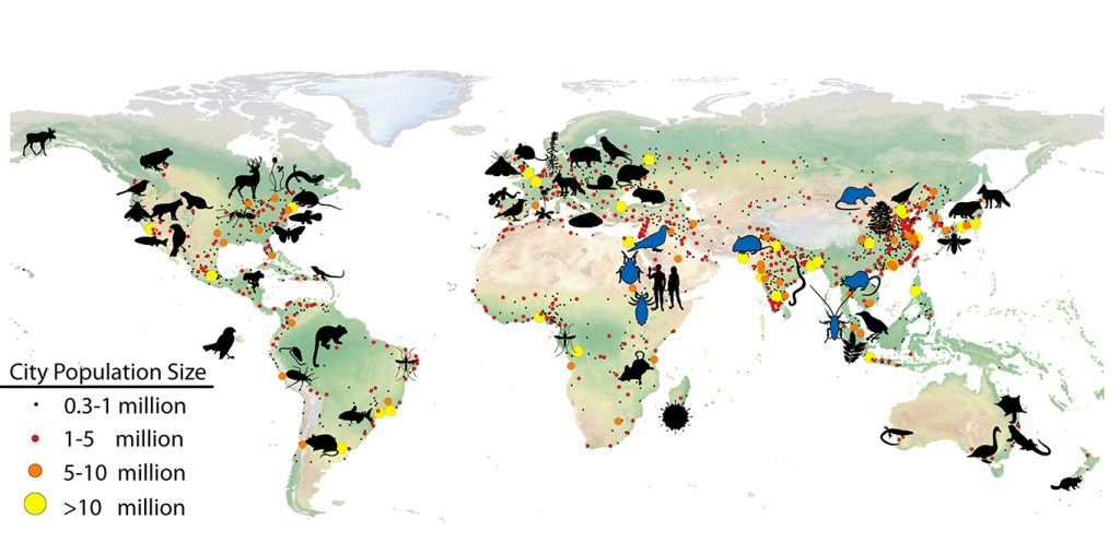 "In ""Evolution of Life in Urban Environments,"" Munshi-South and Johnson show how the study of urban evolution has been documented in cities all across the globe. In this accompanying map, blue silhouettes represent the approximate regions of origin of species that have adapted to humans since ancient times. Black silhouettes represent locations where urban evolution of species have been studied."