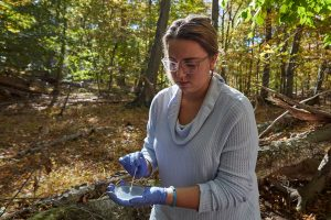 Erin Carter collects a sample of a swab taken from the skin of a salamander.
