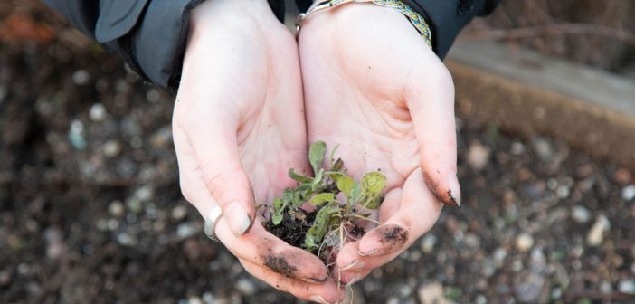 In celebration of Earth Day, students participate in a day of gardening at St. Rose's Garden.