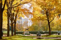 Golden trees arch over the Lincoln Center plaza in the fall.