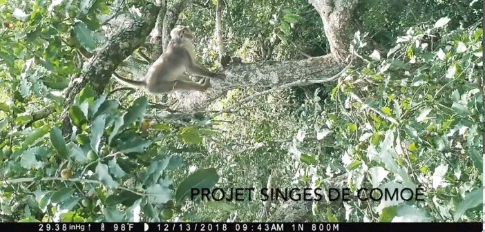 Anthropology Professor Tracks Critically Endangered Monkeys in Africa