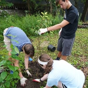 Students planted trees throughout the garden.